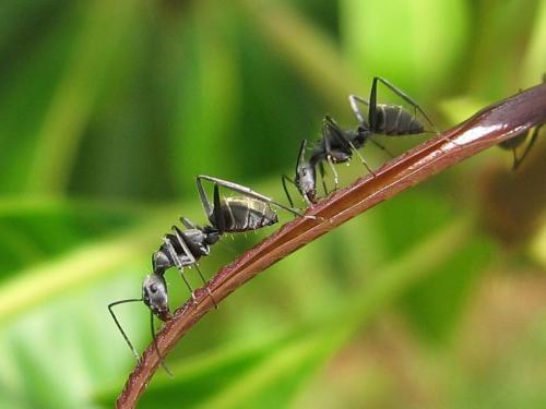 شغل مورچه ها