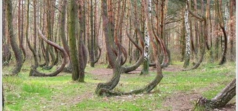 جنگل رقصان