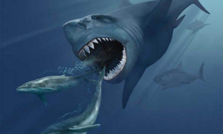 آیا کوسه مگالودون هنوز در اعماق اقیانوس زندگی می کند؟