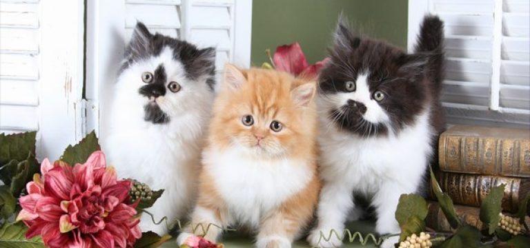 گربه ها چه زمانی و چگونه اهلی شدند؟