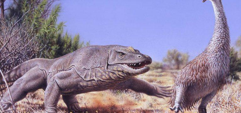 انقراض پرندهی بزرگ استرالیایی به دست انسانهای ماقبل تاریخ
