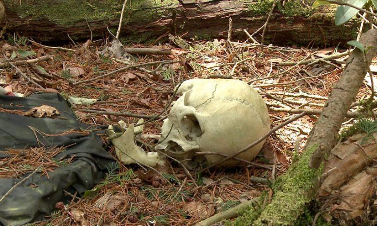 جنگل آئوکیگاهارا معروف به جنگل خودکشی