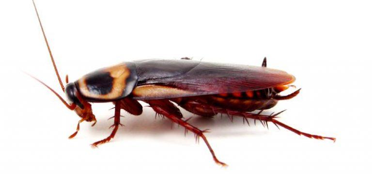 علت زنده ماندن سوسک ها در بمباران اتمی هیروشیما
